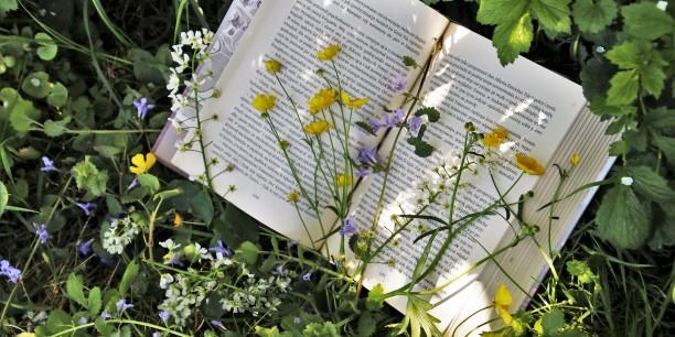 Garten und Bücher - das passt gut zusammen. Foto: pasja1000/pixabay