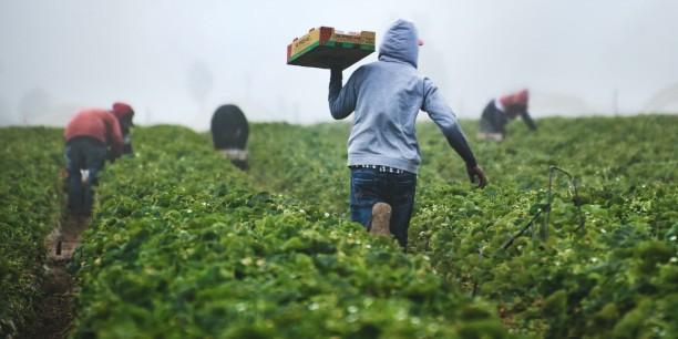 Erntehelfer sind oftmals prekär beschäftigt und erhalten keine Sozialversicherung. Foto: © Tim Mossholder/unsplash