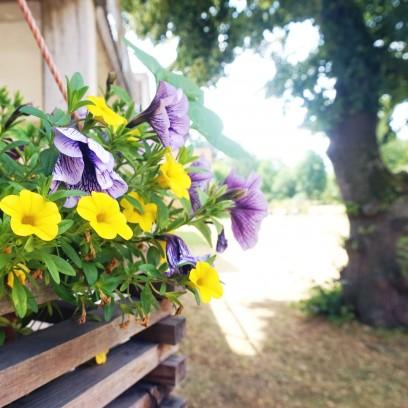 Im Garten des Zinzendorfhauses ist Sommer. Foto: ©Désirée Reuther/ EAT