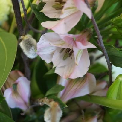 Blumige Frühlingsgrüße. Foto: © EAT