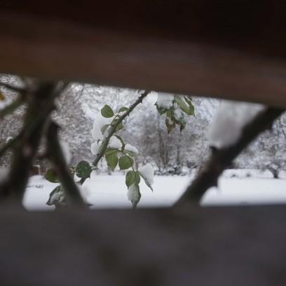 Winter im Garten des Zinzendorfhauses. Foto: © EAT